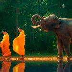 significado de un elefante